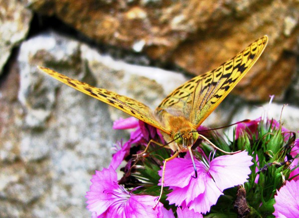 butterfly in nature photo