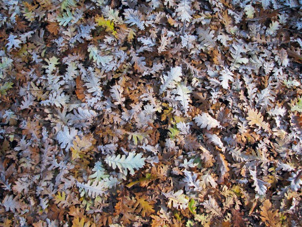Winter is Here, leaves on the ground